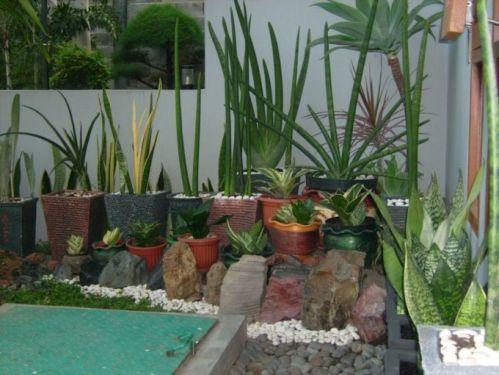 arza-garden