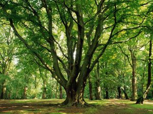 Teduh, tenang dan damai di hutan