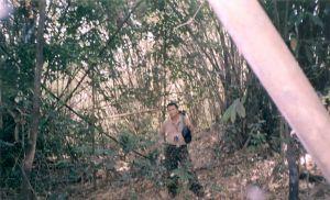 Hutan Bambu Majalengka